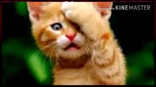 Клип про котят ( детские песенки )