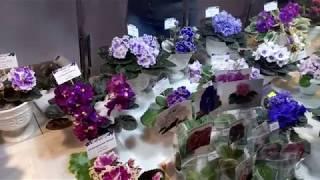 Выставка фиалок в городе Харьков, ноябрь 2017. Exhibition of violets in Kharkov.