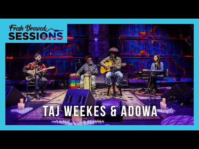 Fresh Brewed Sessions | Taj Weekes & Adowa | 41 Shots