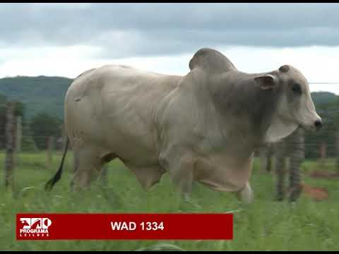 LOTE 82 - WAD 1334