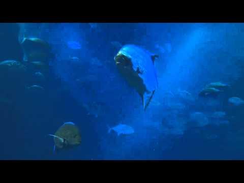 Urology Patient Reception Area Video - Underwater