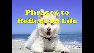 Phrases to Reflect on Life