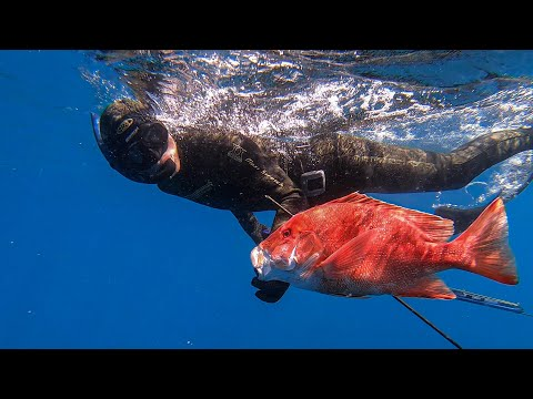 Double Island Diving, Spearfishing Red Emperor (Robinson Brothers) Ep31