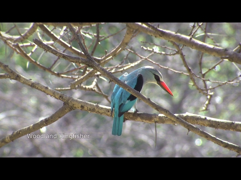 Birds of northern South Africa part 2