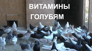 29.04.20. Одуванчик витамины для голубей.Dandelion Vitamins for Pigeons