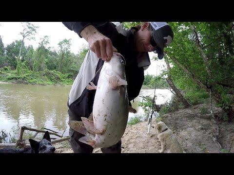 Bank Fishing For Catfish - Catching Big Blue Catfish With Shad Bait