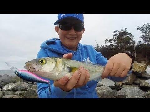 Fishing Kingston Beach: Australian Salmon On Hueys Lures!