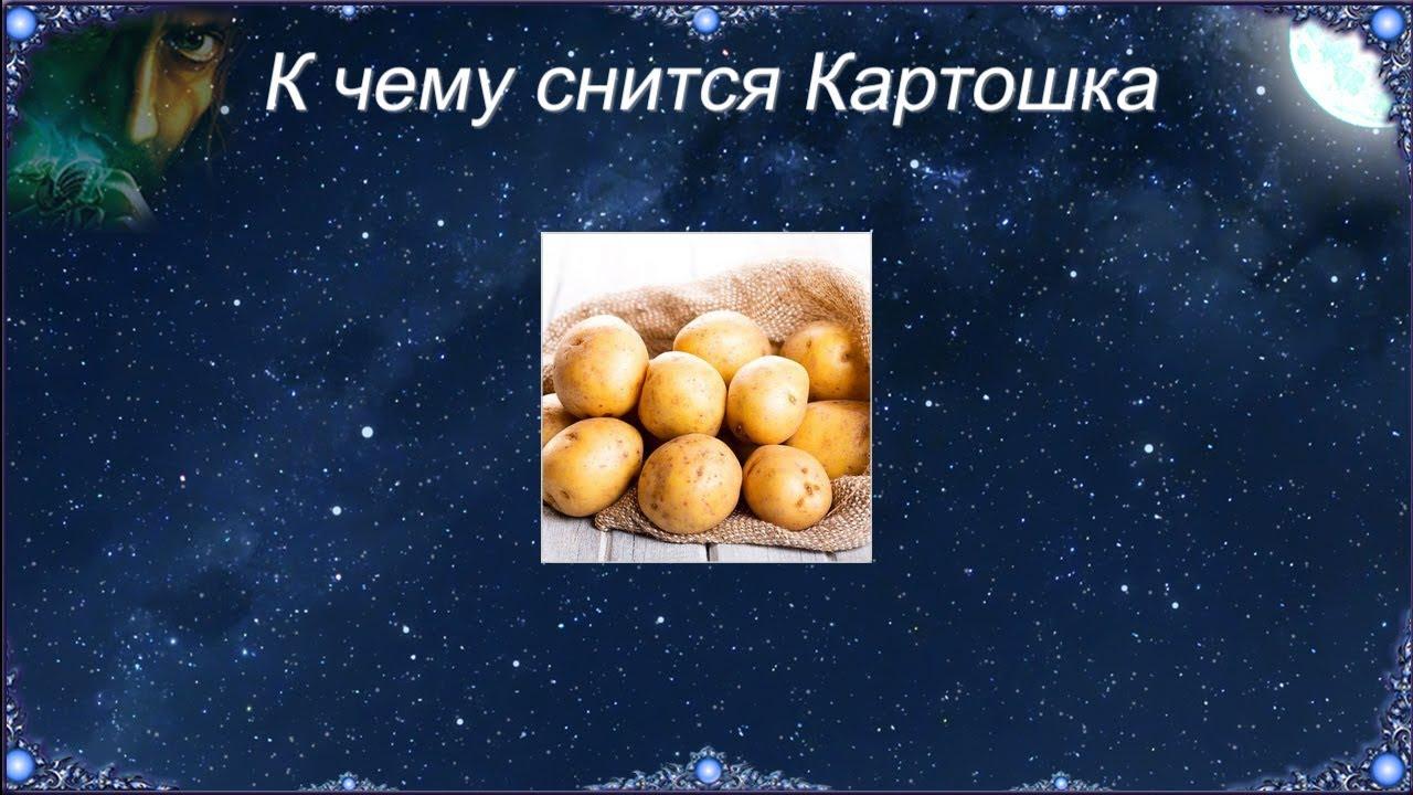 Где находилась картошка когда вы увидели ее во сне?