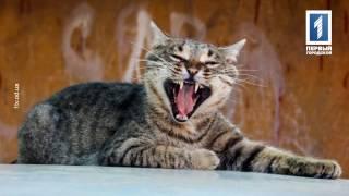 """Где Идем?! Одесса: Фотоблог Екатерины Гринкевич """"Одесские коты"""""""