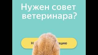 Онлайн-консультации с ветеринаром в Яндекс.Здоровье
