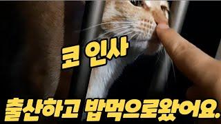 (고양이랑친칠라랑)길냥이가 출산 후에 얼굴을 잘 안보여…