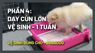 Dạy chó đi vệ sinh đúng chỗ trong 1 tuần (#Boss064) | Successful dog potty training by BossDog