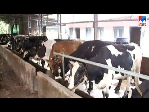 പ്രളയത്തിൽ ഡിവൈൻ ഫാമിലെ രണ്ടായിരത്തിലേറെ മൃഗങ്ങൾ ചത്തു | Muringoor Divine Diary Farm Flood
