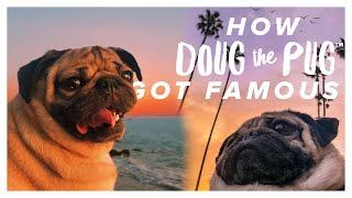 How Doug The Pug Got Famous