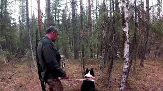 весна 2016 охота на медведя