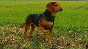 Popular Videos Greek Harehound Youtube
