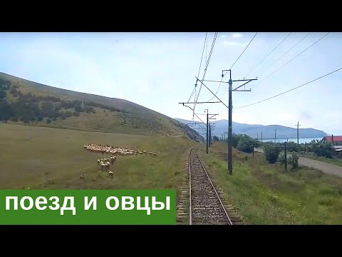 Грузовой поезд и овцы у озера Севан в Армении