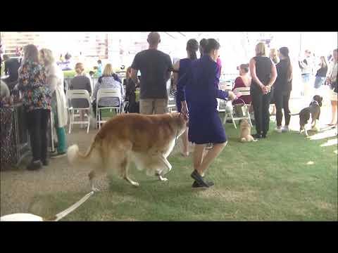 Many Breeds Judge Sydney Royal Dog Show 2019 a