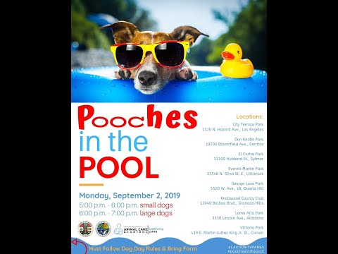 Producer Michelle - Labor Day Pooches In The Pool Event