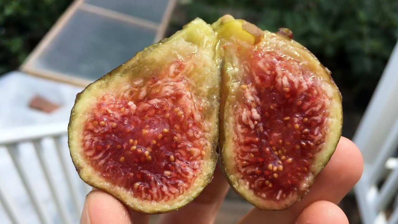 La Bourgeoise Fig - A French Favorite