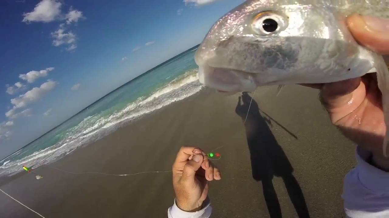 How to catch tons of whiting surf fishing florida youtube for Whiting fish florida