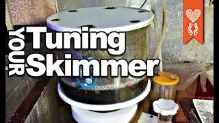 How should you tune your protein skimmer