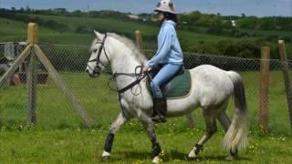 funny horse falls and fails