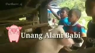 Download lagu Lagu sedih untuk BABI Mars BABI Mangoli pe jolma mate do babi amang nasib ni babi on MP3