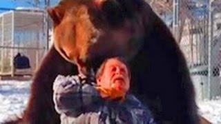 Медведь убийца. Медведь убил дрессировщика / Полная версия / Ужасное нападение медведя