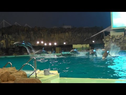 Dolphin Performance in Port of Nagoya Public Aquarium 2014/07/26