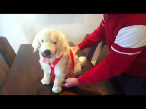 dog harness fitting instructions youtube. Black Bedroom Furniture Sets. Home Design Ideas