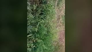 Sask RCMP shoot dog during arrest