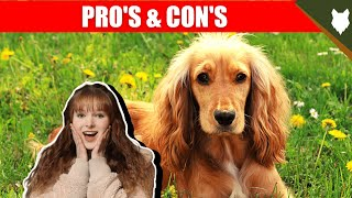 BREED PROS AND CONS COCKER SPANIEL