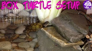 set up my box turtle setup with me