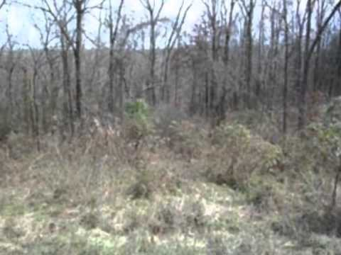 150 Acres for Lease In Breckinridge County, KY