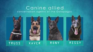 Sea Shepherd's Galapagos K-9 Unit (English Language Version)
