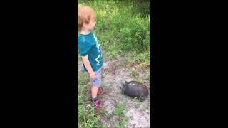 tortoise release 2019