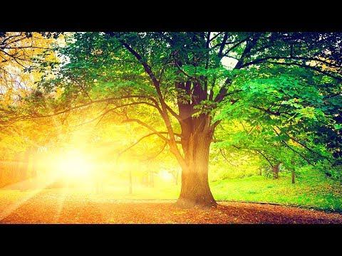 Relaxing  Reiki Healing  Meditation  Sleep  Calming  Zen  ☯1917