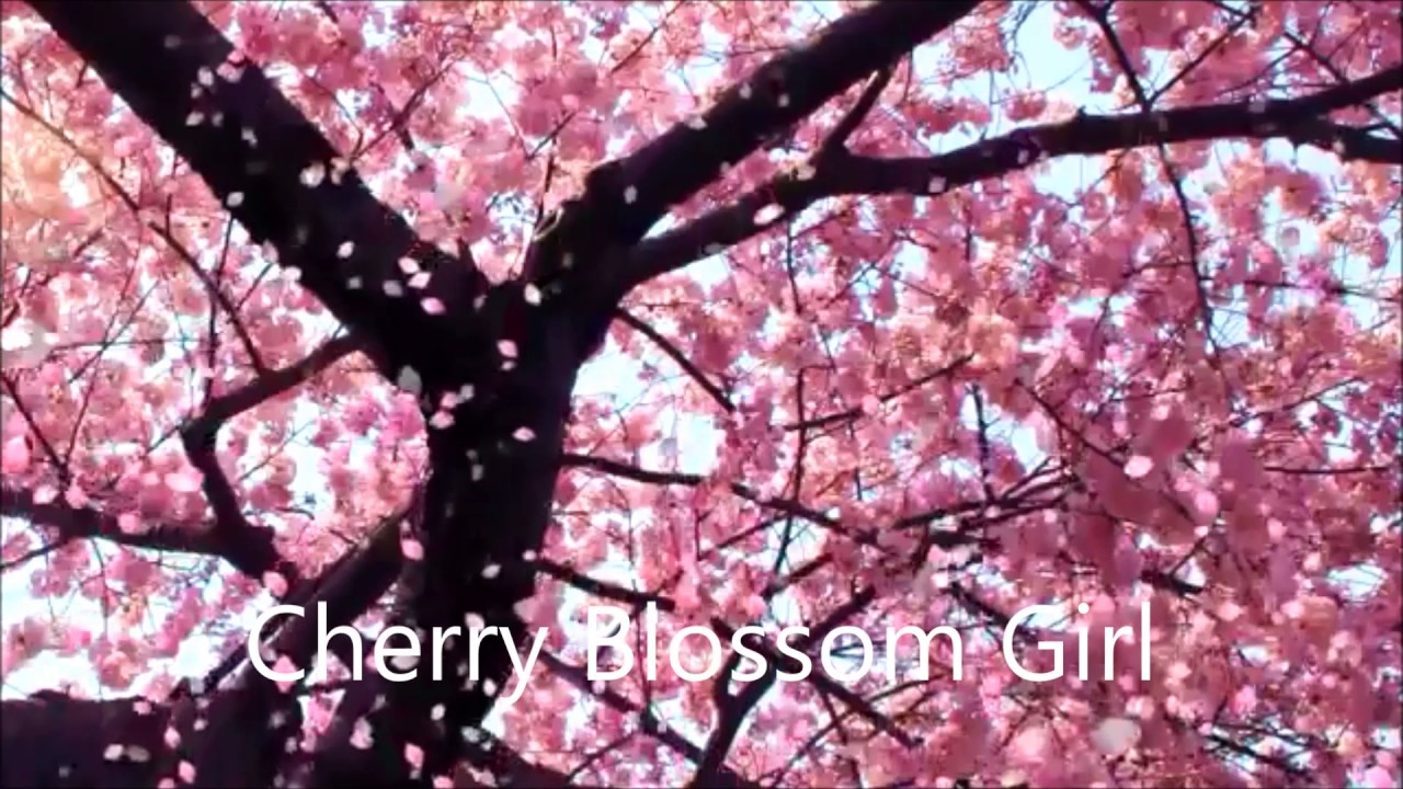 Cherry Blossom Wallpaper Hd Cherry Blossom Girl Air Youtube