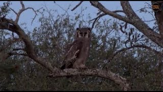 Pt 2 Safari Live's Sunset Safari Drive at 5:00 PM on May 06, 2018