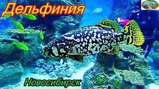 Дельфиния.Новосибирский дельфинарий.Подводное царство