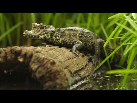 Crocs: Ancient Predators in a Modern World, Academy of Natural Sciences at Drexel University