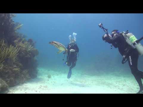 Little Cayman Beach Resort Dive Trip 2016
