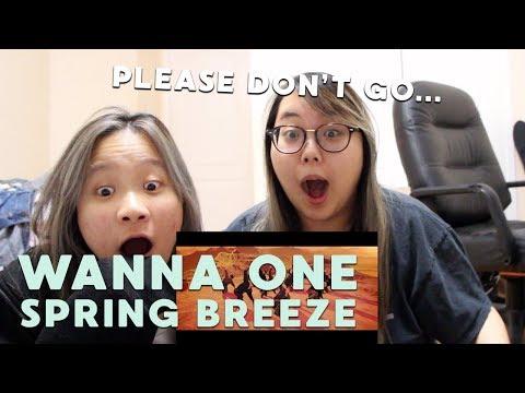 MV REACTION | Wanna One (워너원) - '봄바람 (Spring Breeze)' M/V