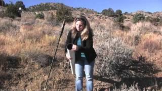 Finding a dead bird