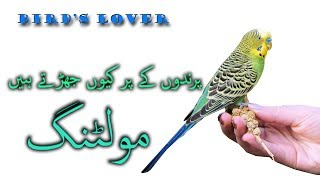 What is birds molting full information hindi/urdu Video No. 26