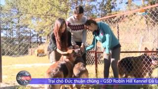 Robin Hill : Tư vấn chọn chó cưng Becgie , Alaska