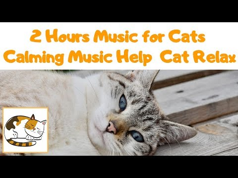 2 Hours Music for Cats - Calming Music to Help your Cat Relax