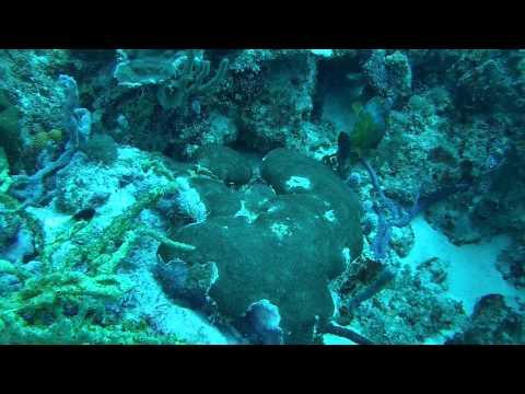 Croisière Au Dela Plongee Grenadines Saint vincent  Bequia épisode 03
