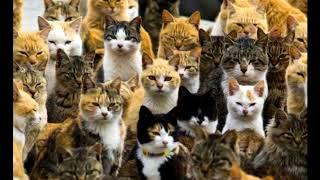 Коты Воители: 3 серия. Пусть сам сюда!